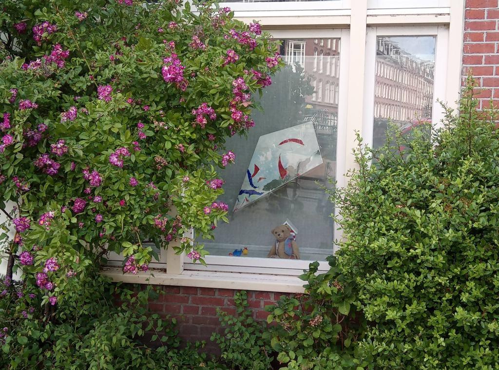 Мече на прозорец в Амстердам
