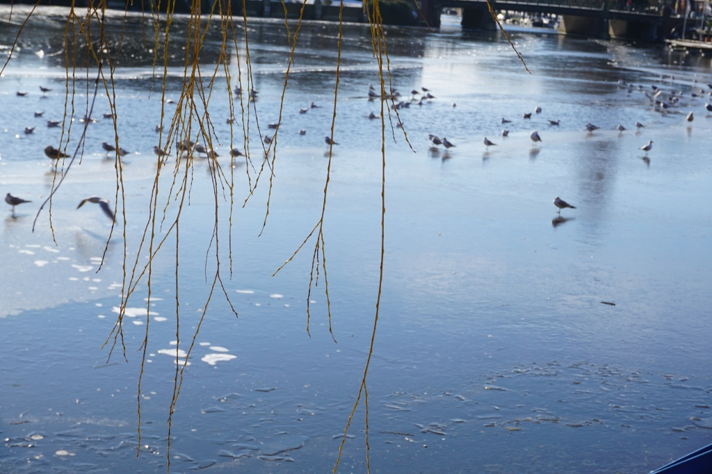 Птици се радват на слънцето по de Kom (кръстопът на пет канала в Amsterdam-Zuid). (Снимка: Mokum.bg)