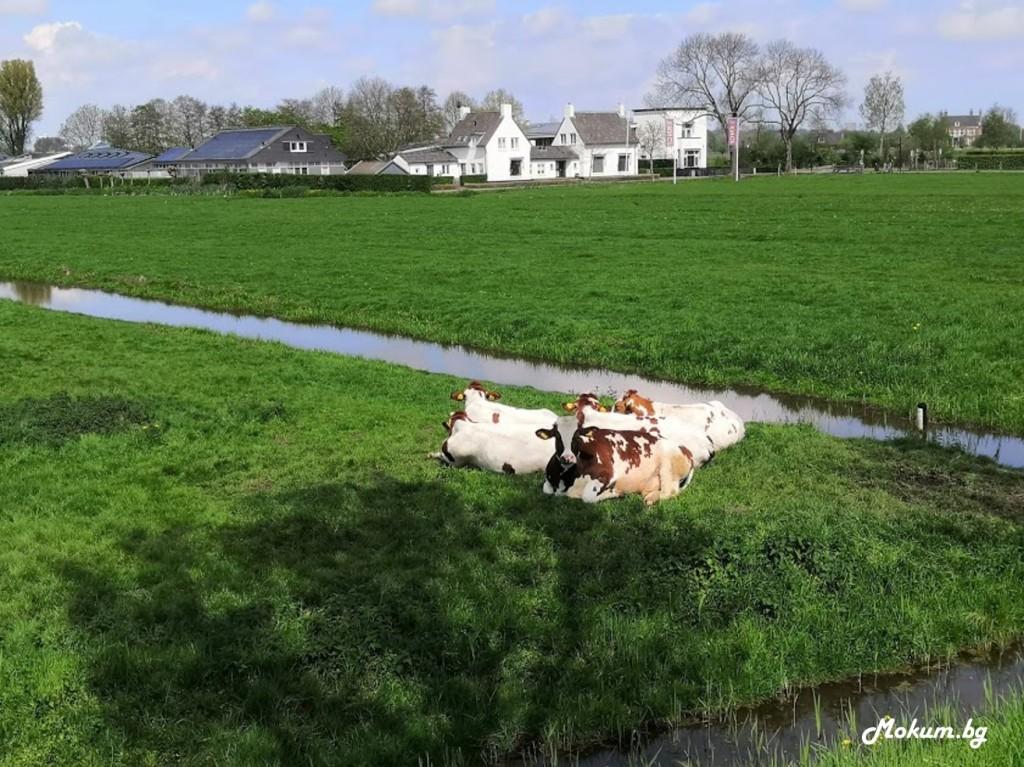 Десетината километра между Ouderkerk aan de Amstel и Amsterdam са голяма красота, от която и страна на река Амстел да ги изминавате. Холандия