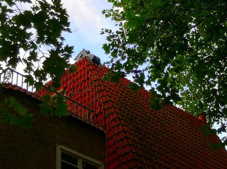 Петелът на покрива символизира социалистическите убеждения на работническия кооператив de Dageraad, Амстердам.